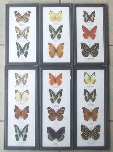 Lot comprising two collections of 9 and 12 Exotic Butterflies each, various sizes - 32 x 13.5cm, and 25 x 13.5cm  (6)