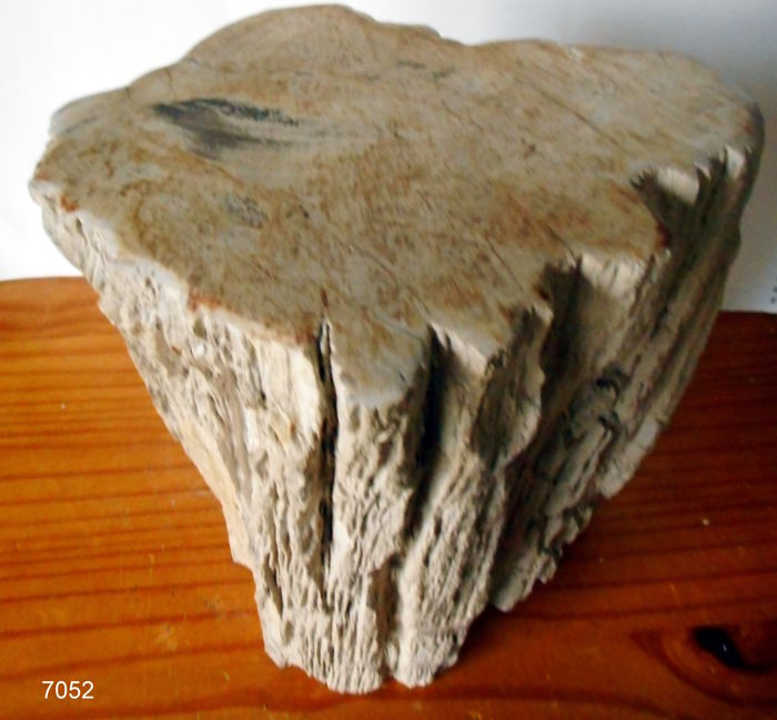 Sidetable 25 Cm.Small Side Table From A Trunk Of Petrified Wood 27 X 25 X 20 Cm 16 6 Kg Catawiki