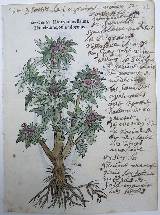 Tabernaemontanus: Herbalist and Author Known for Botanical ...  |Botanical Woodcut