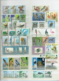 Birds – Topical batch from all over the world on stock cards