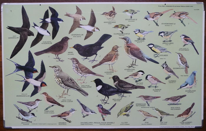 Old school poster with the songbirds of The Netherlands.