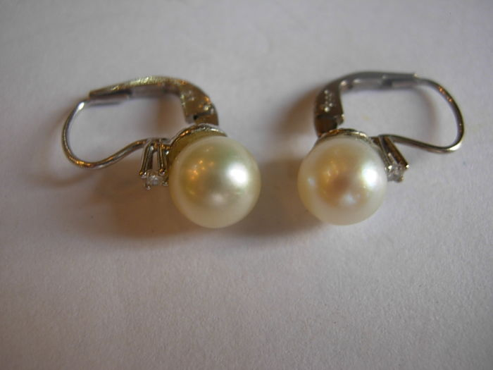 Pearl earrings; gold 14 kt - Akoya pearls - height 15.5 mm