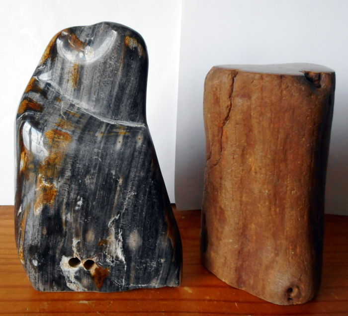 Petrified wood (one with worm holes) - 180 and 210 mm - 4552 gm (2)