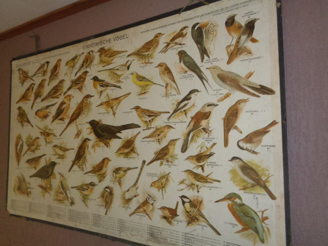 Old school posters with native birds