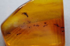 Baltic amber with insects - air - inclusions - 1.5 x 1.4 cm