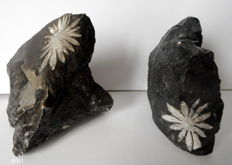 Rare; 2 Flower stones - approx. 80 and 100 mm - 536 gr