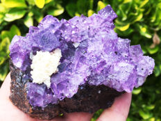 Classic Transparent Clear Purple Fluorite Crystal Cubes with Baryte on Sphalerite matrix - 10 x 6,5 x 5 cm - 463 gm