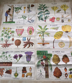 Six double-sided School posters Tropical agricultural products