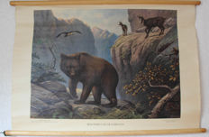 Two school posters - inhabitants of the Carpathians and North American forest residents