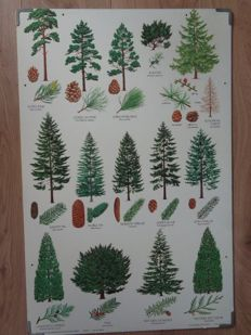 Four beautiful school posters with 51 species of trees and their fruit.