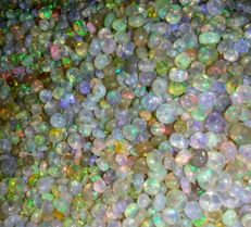 Lot of natural Welo Fire Opals - 125ct