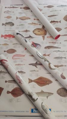 Lot of 3 large marine life cards for educational use: crustaceans, molluscs and fish