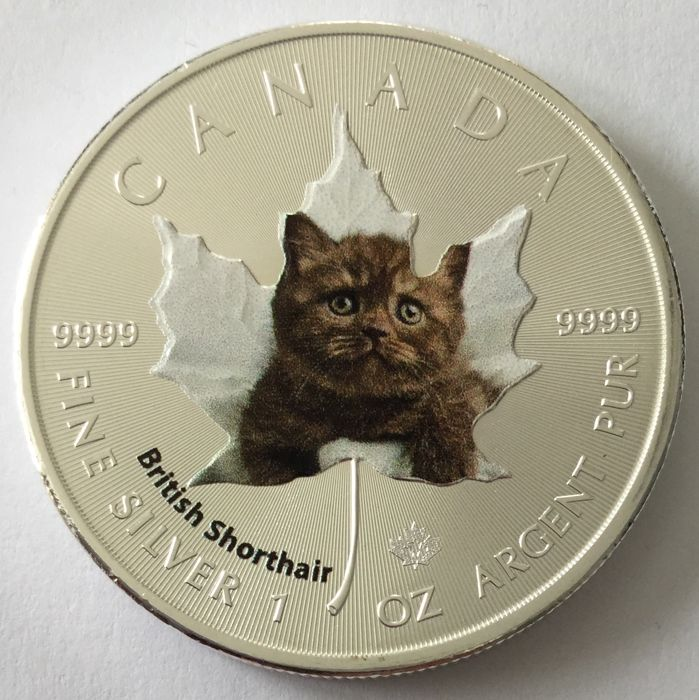Canada – 5 Dollars 2017 'Cute Kittens – British Shorthair' colour edition - 1 oz silver