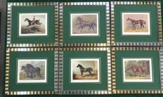 A Set of Six (6) original  Horses  Prints 1870' ca - Framed