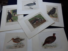 Collection of 6 chromolithos of Birds