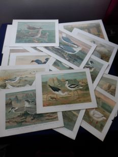 12 beautiful antique old lithos of birds