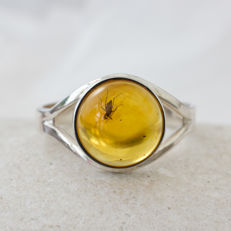 Sterling silver Baltic amber ring with fossil insect inclusion - ring size 18.5 mm diameter