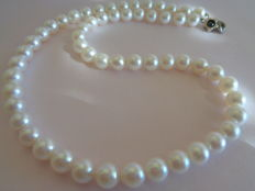 Extra white 7 mm saltwater pearl necklace, 43 cm