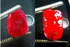 Natural Red Burma Rubies rough– 47.20cts(2)