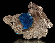 Blue Cavansite 'Flower' Crystal Cluster on Basalt matrix - 6 x 4.5 cms - 95 gm
