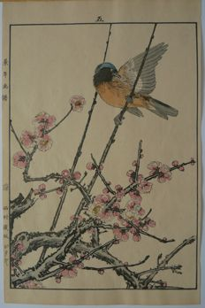 Beautiful woodblock print of a daurian redstart on a plum blossom branch, by Imao Keinen (1845–1924) - Japan - 1892