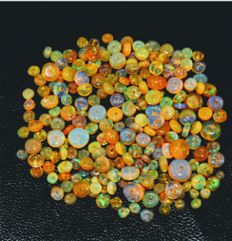 Lot of 250 Natural Fire Opals - 65 ct