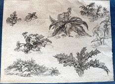 Jean Baptiste Huet (1745 - 1811) - original studies of leaves and plants