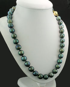 Tahiti pearl necklace, 10-11 mm, anthracite grey with pistachio shimmer 585 yellow gold --- no reserve price ---