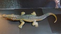 Figure of crocodile