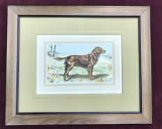 Hunting Dogs - Framed