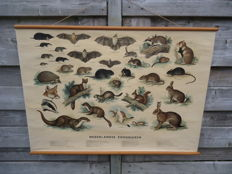 Excellent copy of the school poster, 'Dutch mammals'