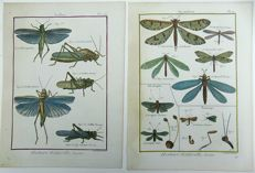 Two prints Pierre André Latreille (1762 - 1833) - Insects: Crickets, Gryllidae, Myrmeleon, Ant-Lion - 1790