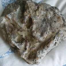 Finely imprinted Allosaurid Dinosaur footprint, as found - 16cm