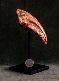 Tyrannosaurus rex - Hind leg claw, cast replica in copper with custom stand - 14.5 cm