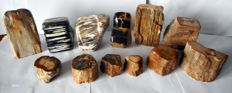 Lot comprising various pieces of Petrified Wood - 50 to 150mm - 11 kg  (12)