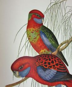 John Gould - Mr Gould's Tropical Birds - 1955