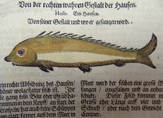 Leaf with 6 prints - Conrad Gesner - Fish: Sturgeon,  Acipenseridae - 1669