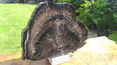 Petrified Wood Branch Section - 33 x 27 x 20cm - 2.9kg