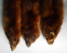 Set of vintage Mink skins - Mustelidae sp. - 78 to 82cm  (3)