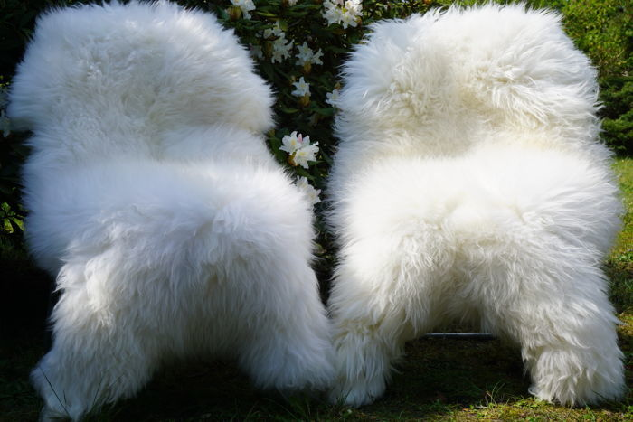 Pair of thick, naturally white sheep skins - Ovis aries - 130 x 80 cm and 120 x 75 cm (2)