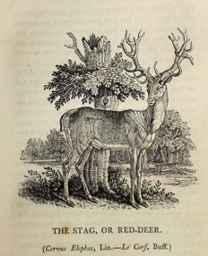 Thomas Bewick - A General History of Quadrupeds - 1807.