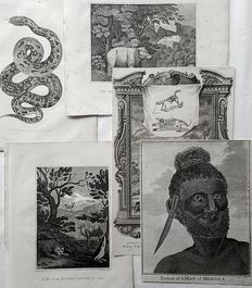 5 prints by various artists - Anthropology en natural history - Exotic foreign cultures, animals and nature - 18th & 19th century