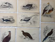8 ornithological prints by an unknown artist - Various Birds - 19th century