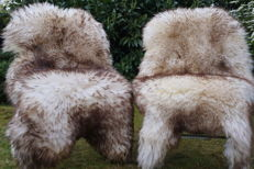 Fine pair of extra large mouflon sheep skins - 130 x 80 cm (2)