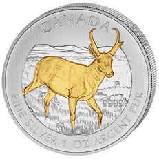 "Canada - 5 dollars 2013, ""Wildlife Antilope"", partially gold-plated - 1 oz of silver"