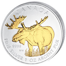 "Canada - 5 dollars 2012, ""Wildlife Moose"", partially gold-plated - 1 oz of silver"