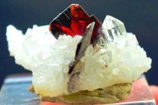 Terminated Red Color Brookite Crystal with Clear Quartz Cluster Specimen - 50*43*20 mm - 29gm