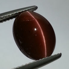Cat's Eye Scapolite -  6.41 ct