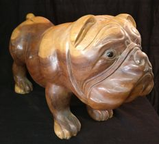 Bulldog sculpture in walnut wood, with glass eyes