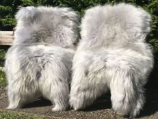 Extra large, long-haired, bluish-grey Icelandic sheep skins - Ovis aries - 127 x 75 cm